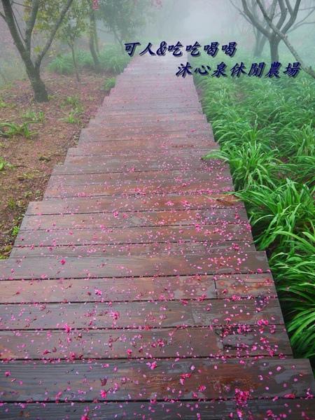 沐心泉休閒農場:<台中櫻花季>沐心泉休閒農場