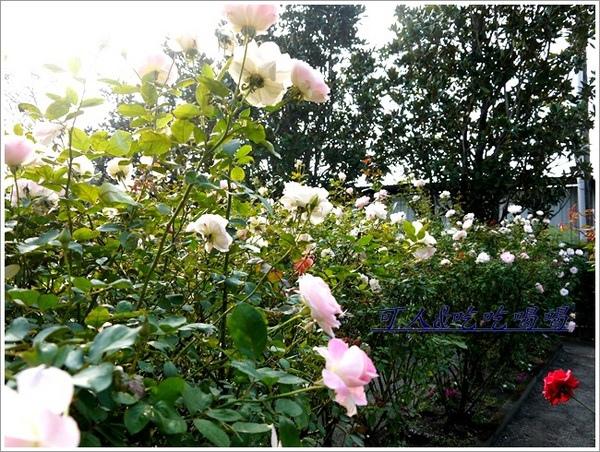 全得玫瑰莊園:<田尾餐廳>全得玫瑰莊園