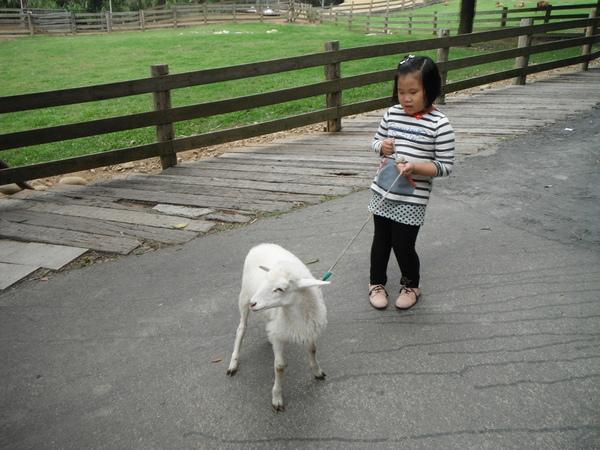 飛牛牧場:飛牛牧場餵牛牛