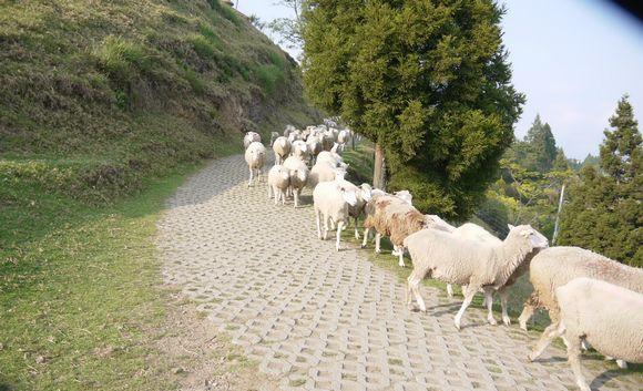 清境農場青青草原:青青草原&老英格蘭